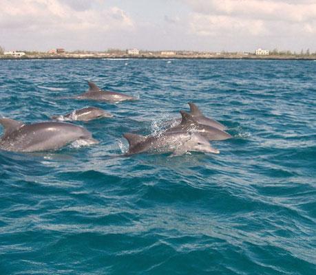delfini mida creek