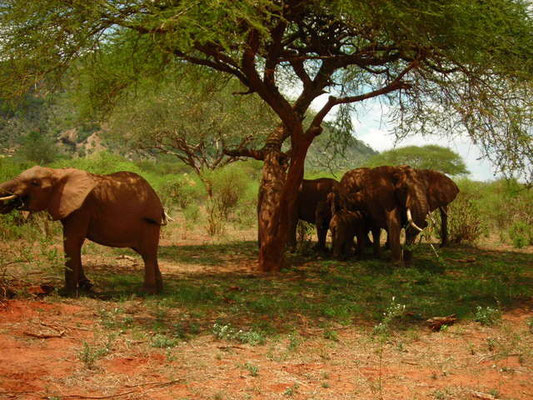 elefanti safari tsavo est in2kenya