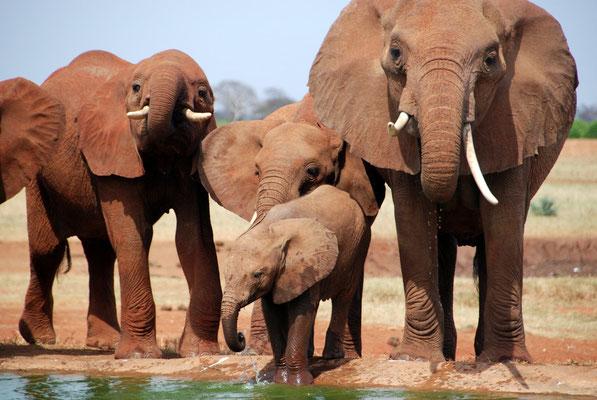 elefante kenya tsavo in2kenya