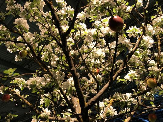 Event Dekoration Frühliung Apfelbaum