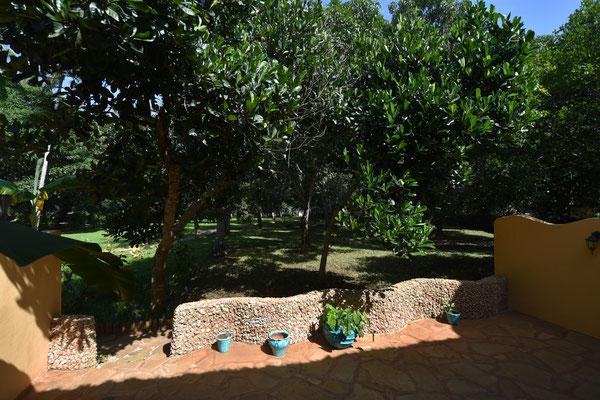 Terrasse Jackfruit Gartenwohnung