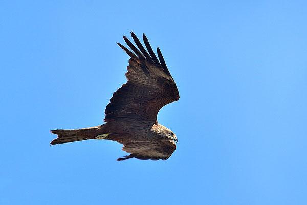 turismo activo ecoturismo altiplano granada observación aves milano negro