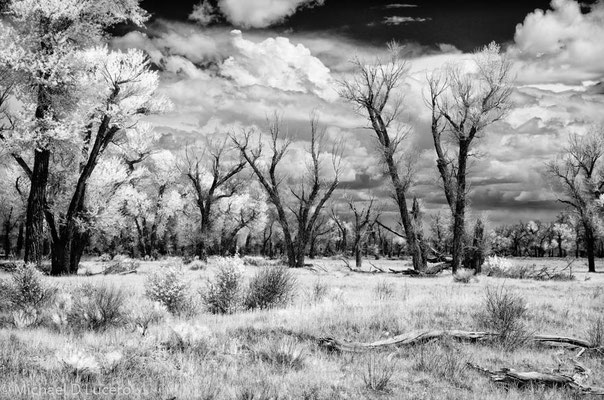 Seedskadee NWR, Wyoming. Photographed using infrared converted camera