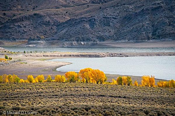Isolate fall color near Panguitch, Utah