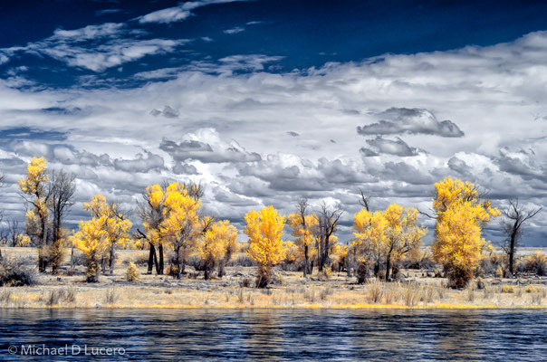 Trees along the Green River. Seedskadee NWR, Wyoming. Manipulated infrared capture.