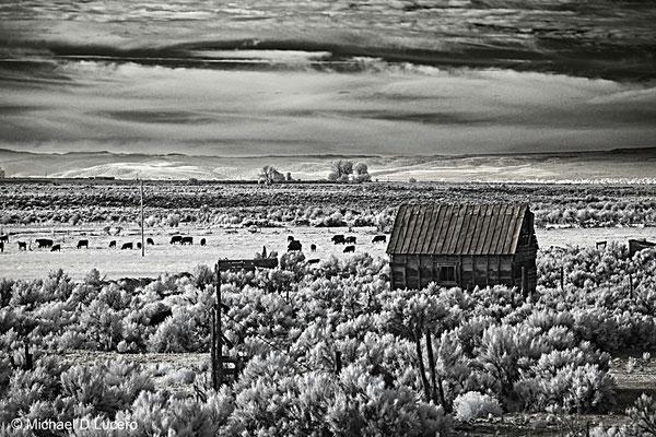 IR landscape, Utah