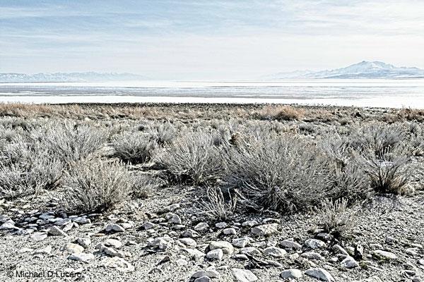 Sage along the Great Salt Lake in winter.