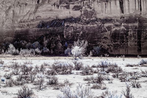 Tree with cliff backdrop. Infrared photograph taken at Dinosaur NM, Utah