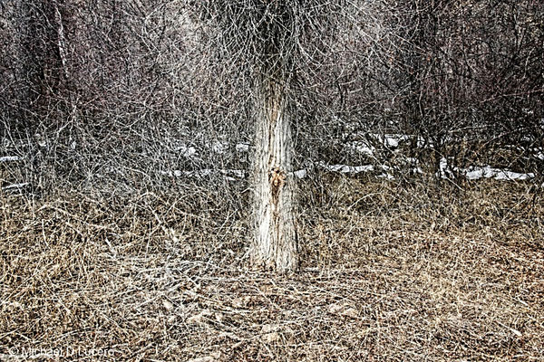 Tree with twigs. Multiple exposure. Jordanelle State Park, Utah