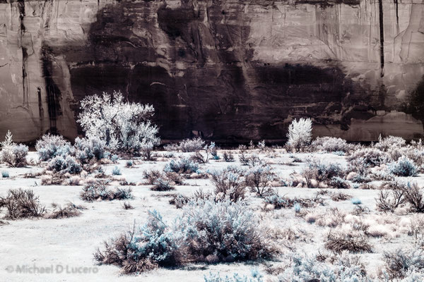 Desert flora with cliff backdrop. Dinosaur NM, Utah