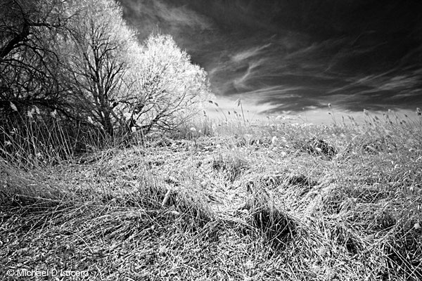 Infrared capture, Bountiful Ponds