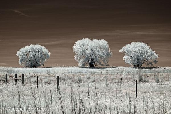 """""""3 Trees"""",  Bear River Bird Refuge, Utah"""