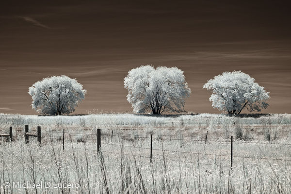 """3 Trees"",  Bear River Bird Refuge, Utah"