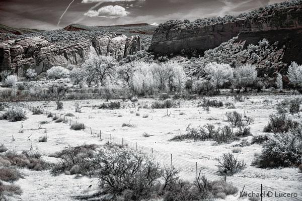 Field and trees at Dinosaur National Monument, Utah