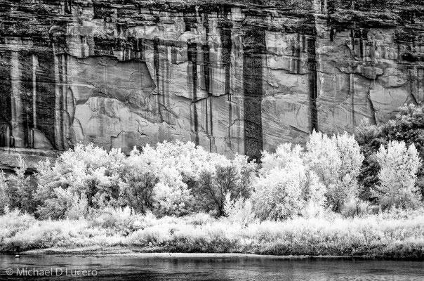 Water, trees, cliff, Dinosaur NM, Utah