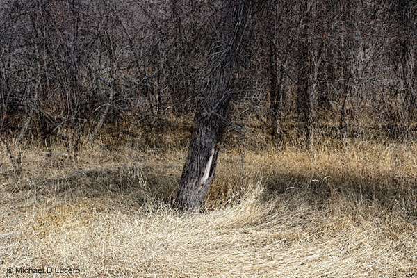 Trees & Twigs series, Utah