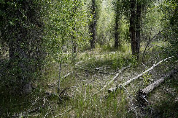 Light through the trees, Jordanelle State Park, Utah