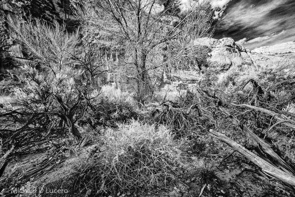 Trees, twigs, and sage, Capitol Reef NP, Utah