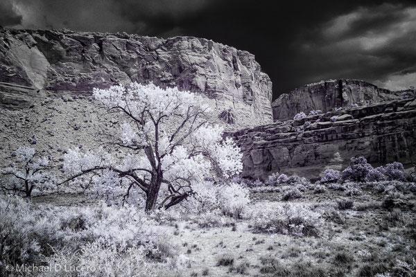 Tree against cliffs, San Rafael Swell, Utah