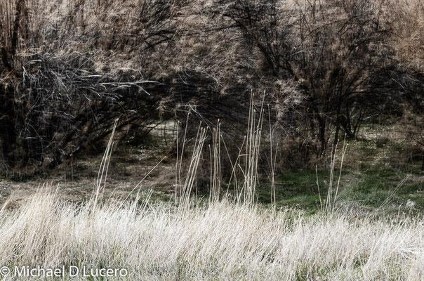 """An Instant"", SLC area, Utah"