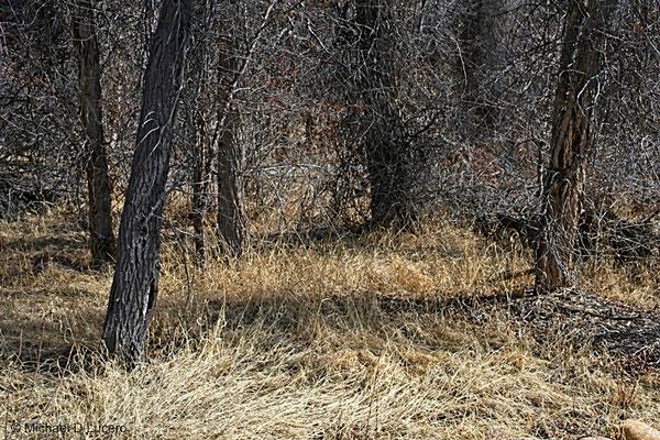 Trees & Twigs series, Northern Utah