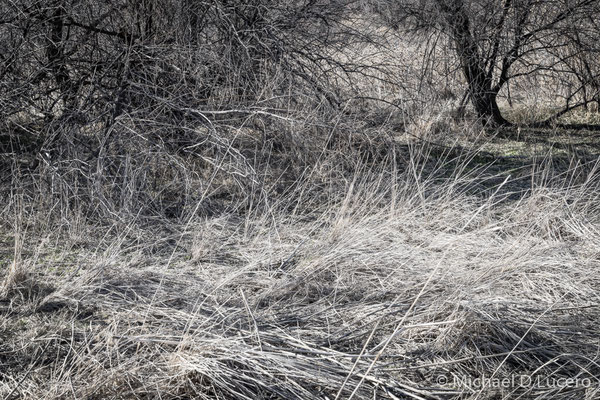 Light and shadow on trees and twigs. Jordan River Trail, Utah