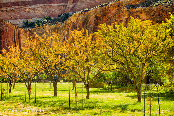 Autumn orchard, Capitol Reef NP, Utah