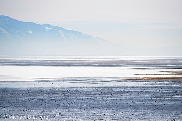 On Antelope Island State Park, Utah
