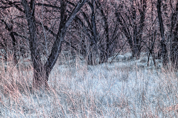 Infrared capture, Jordan River Trail, Utah