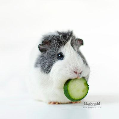 Cumcumber