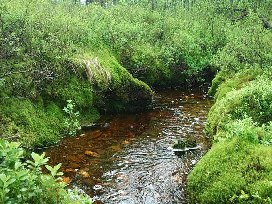 Река Селемжа