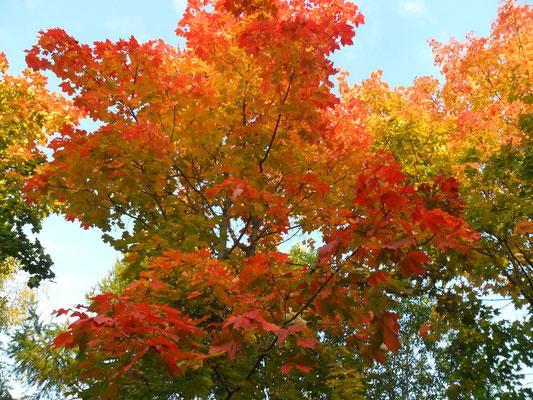 Краски рсени