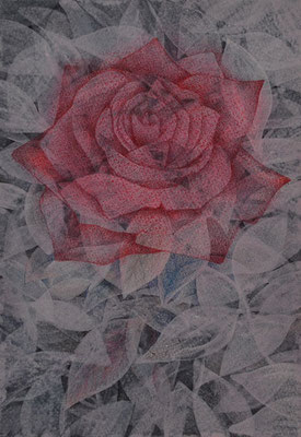 rose1/227×158㎜ SM/acrylic,color pencil on paper/2015