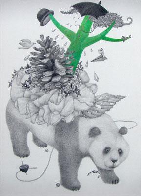 ささやかな支配(panda)     333×242㎜ 色鉛筆・紙
