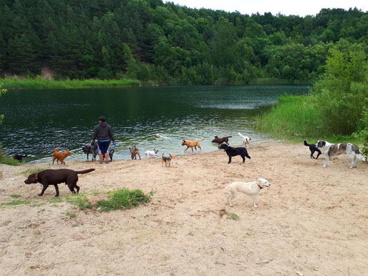 Hunde die sich teilweise vorher nicht kannten, konnten doch ohne Probleme zusammen laufen.