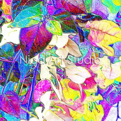 Bougainvillea farbig, 2013, 40 x 40 cm, Print auf Papier, mit Passepartout, Glas & Holzrahmen