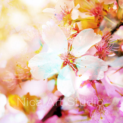 Blossom mix, 30 x 30 cm, aluminum print