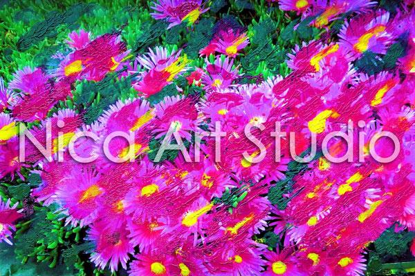 Aster, 2015, 30 x 20 cm, Fotografie mit Ölfarbe