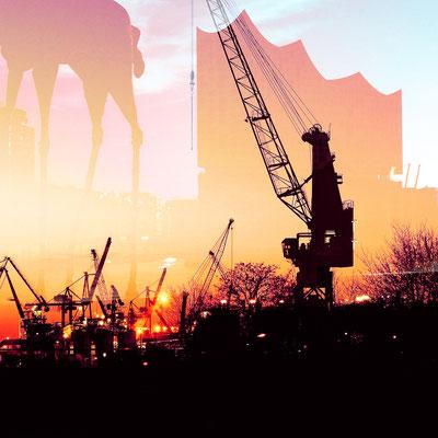 Cranes and Elphi in the sundown, 2017, 30 x 30 cm, aluminum print
