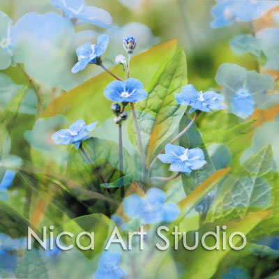 Forget-me-not, 2015, 20 x 20 cm, photograph with oil paint