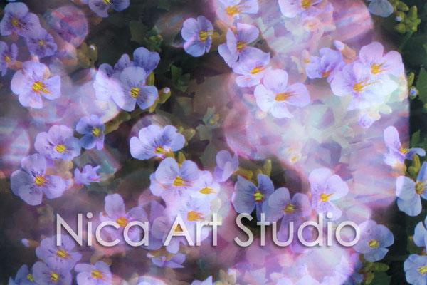 Lila Blumen, 2015, 30 x 20 cm, Fotografie mit Ölfarbe