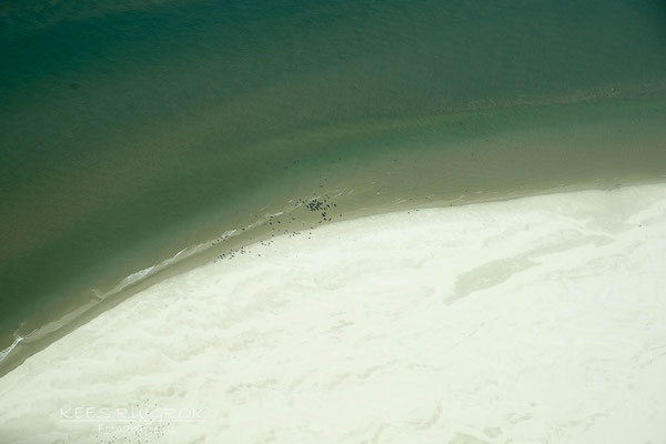 Zeehonden op de Razende Bol