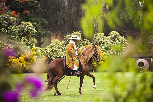 """Caballo de Paso"" - die ""steppenden Pferde"" von Trujillo"