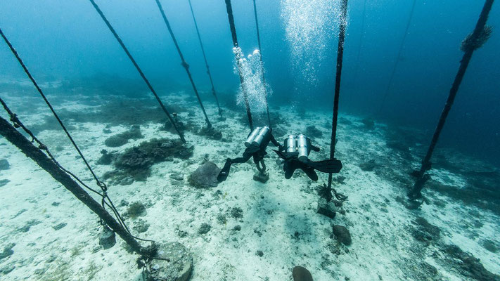 Photo of a scuba diver