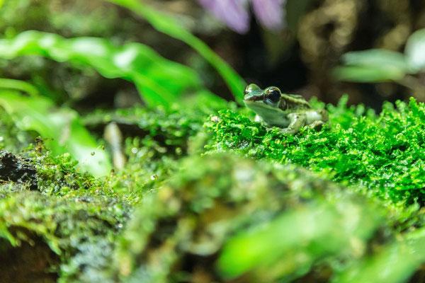 Dangerous frog photo
