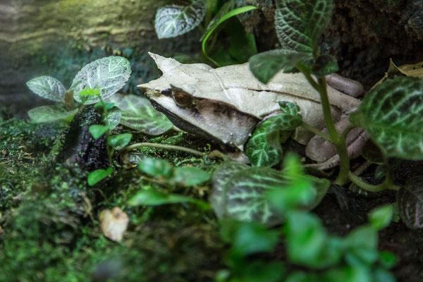 Venemous frog photo