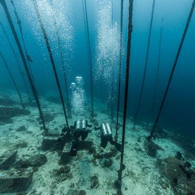 Underwater artificial kelpt photography