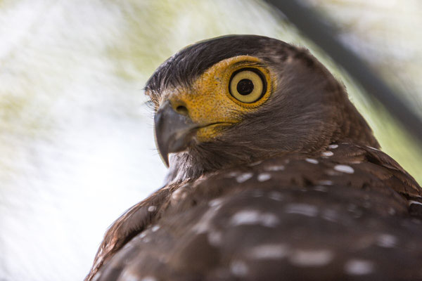 Portraiture of a bird of prey