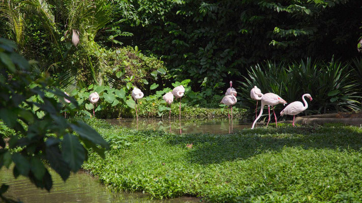 Wild flamingo in a zoo