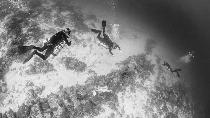 Black and white under water photo